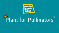 An image relating to Plant for Pollinators